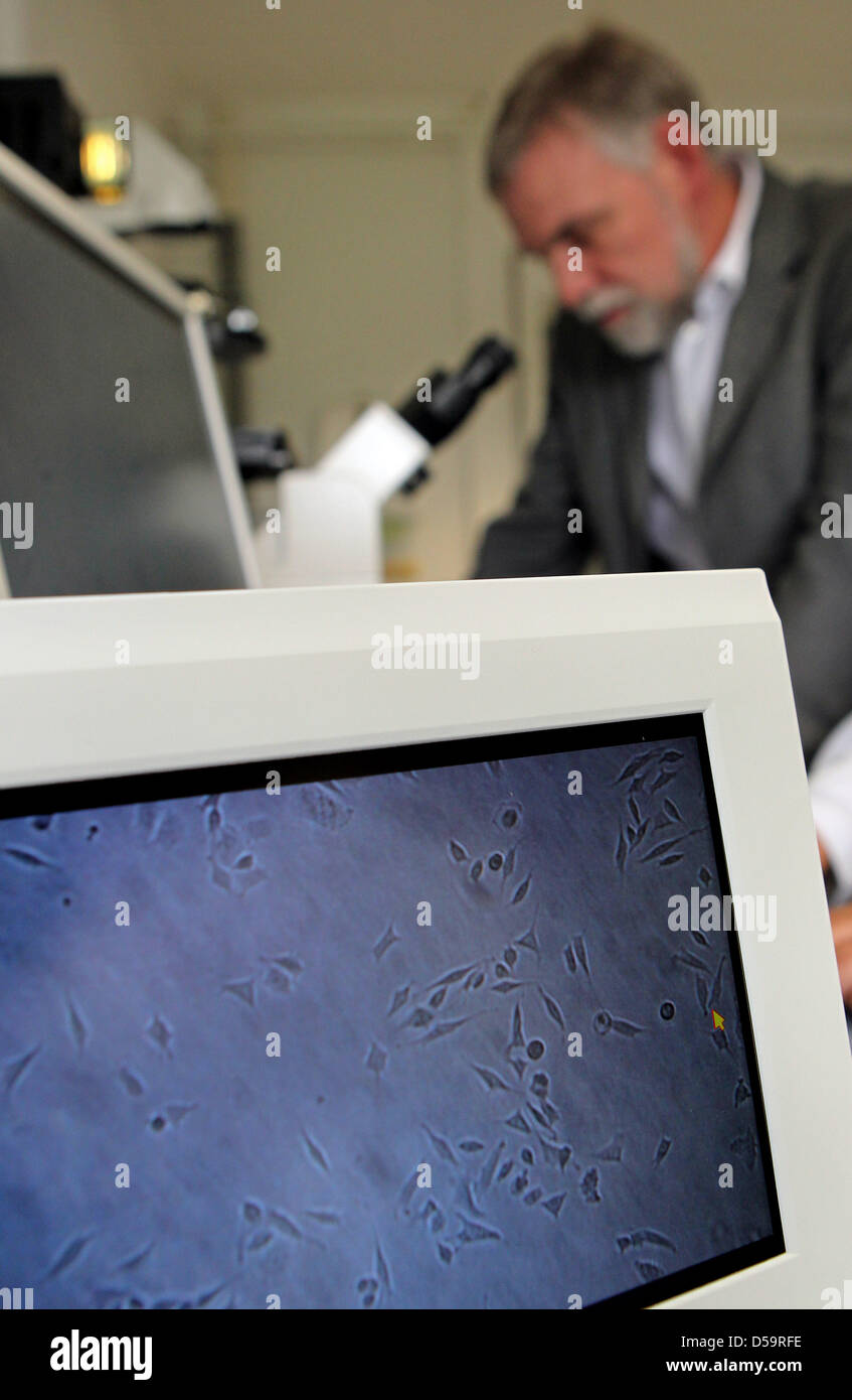 Jochen Flasbarth, President of Federal Environment Agency, checks water samples tested with human cells in Bad Elster, - Stock Image
