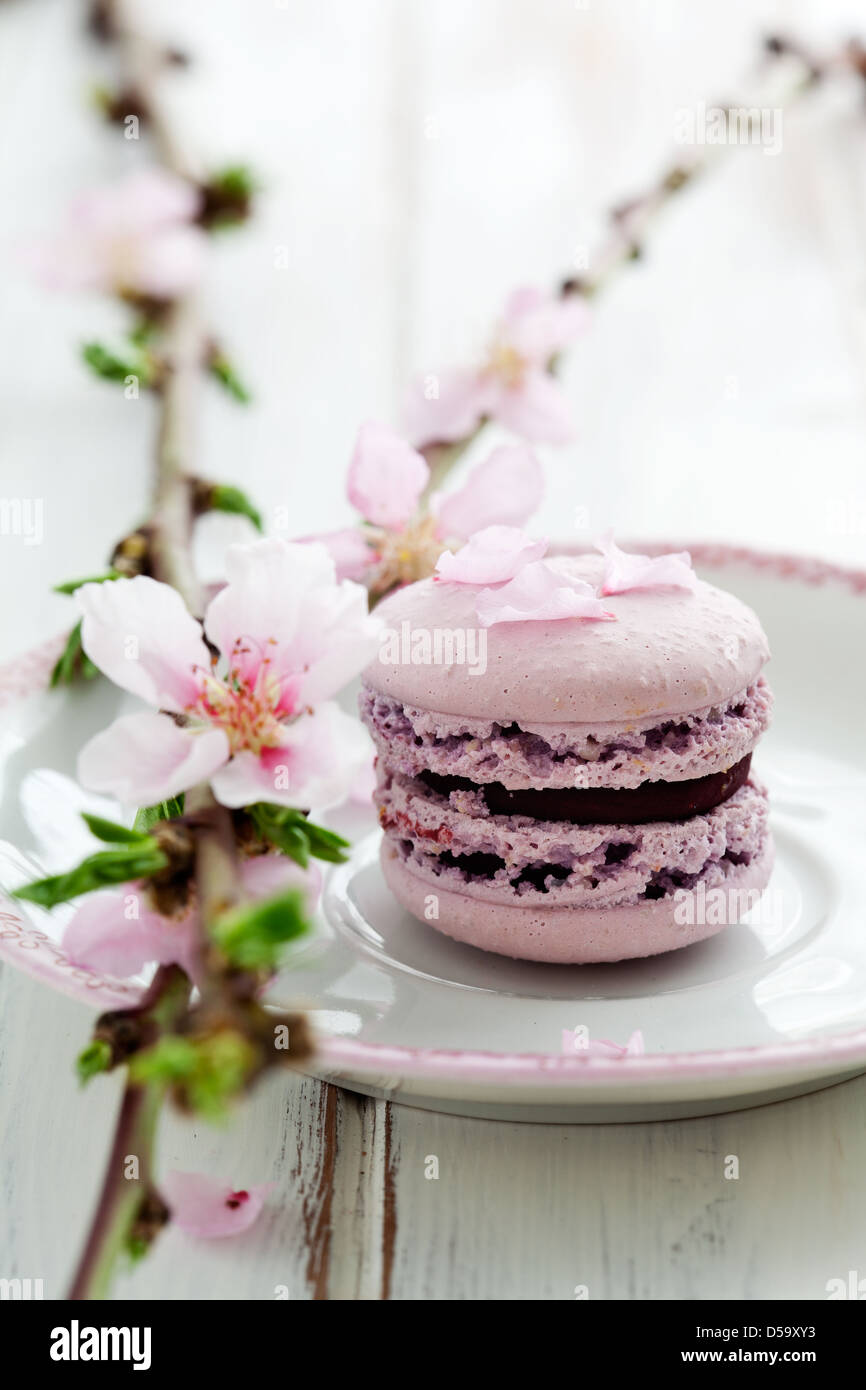 French macaroons in pink, decorated with cherry blossom - Stock Image