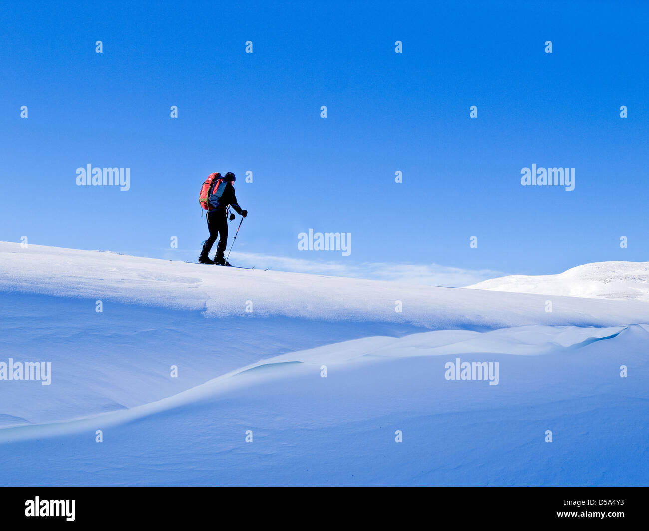 Ski touring in Northern Norway a skier skiing along the top of a snow cornice - Stock Image