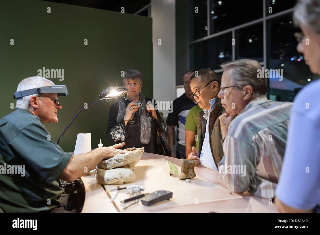 Palaeontology fossil interpretation, Royal Tyrrell Museum, Drumheller, Alberta, Canada - Stock Image