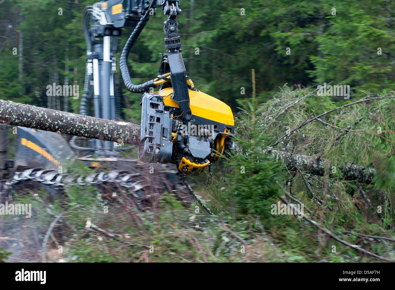 Close up shot of a modern forest harvester at work, chopping fir tree - Stock Image
