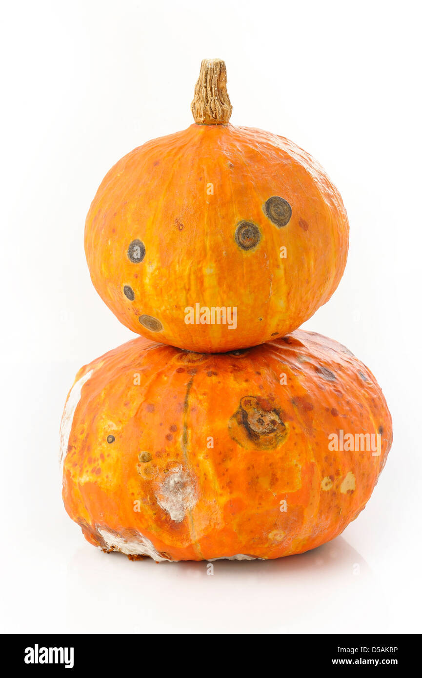 Pumpkin rot on white background - Stock Image