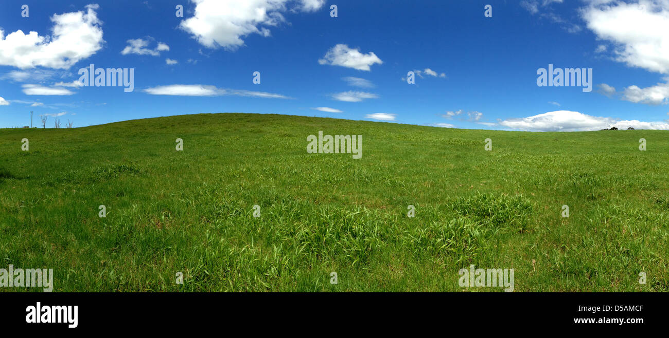 Widescreen shot of grassy field with blue sky and white fluffy clouds. - Stock Image