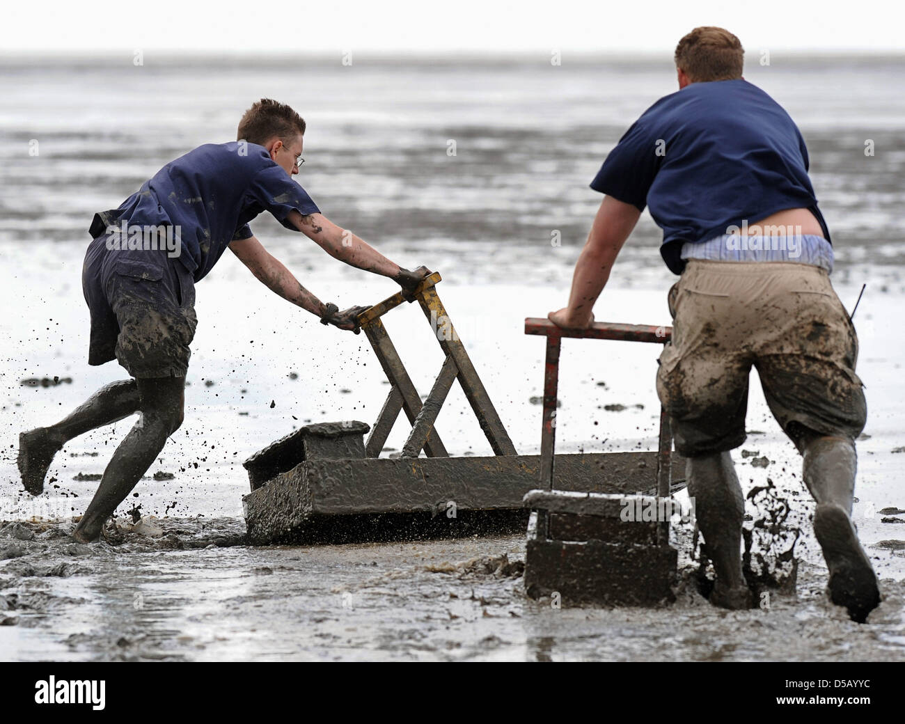 On mudflat sleighs  called 'Kreier', Bernd (L) and Thomas force their way through the mud in the course - Stock Image