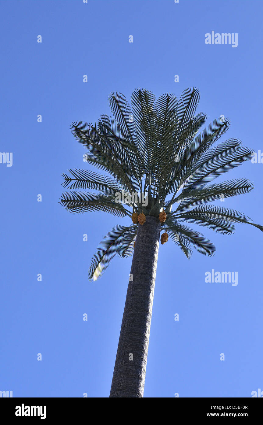 Telecommunications antennas and masts disguised in a man- made Palm tree with trunk ,fonds and  its fruit.Marrekish - Stock Image