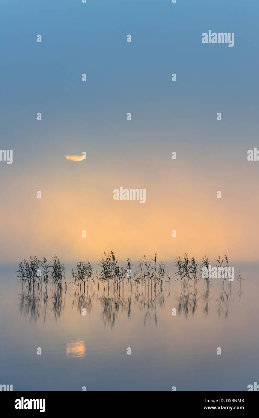 Dawn over lake Finnsjön, Mölnlycke, Sweden, Europe - Stock Image