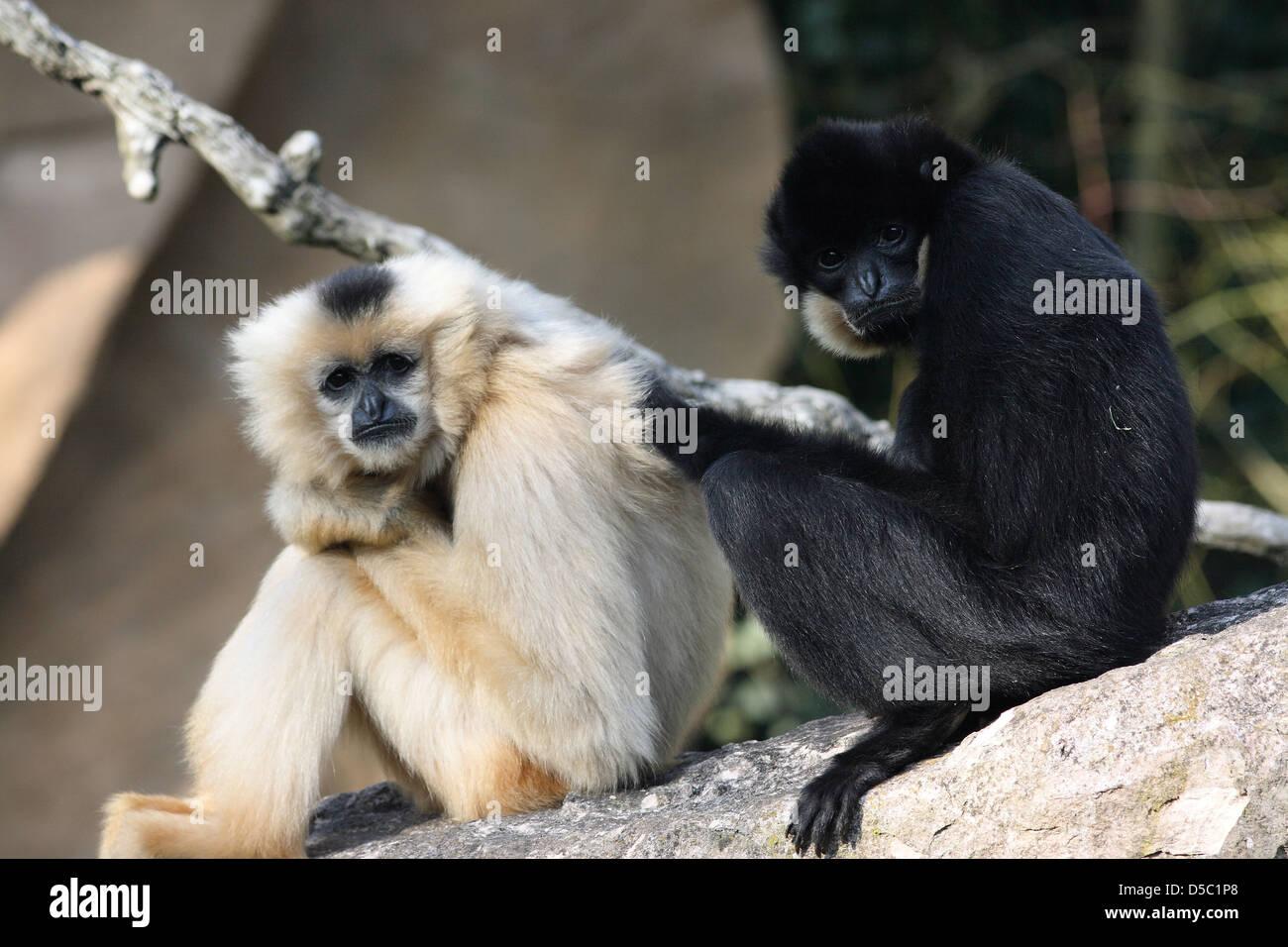 Wildlife Monkies Monkey Stock Photo Alamy Kandy saint city of sri lanka. https www alamy com stock photo wildlife monkies monkey 54969216 html