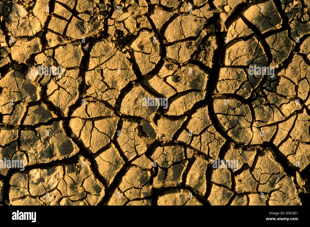 Parched soil - Stock Image