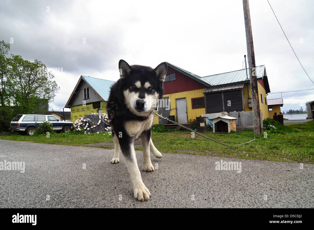 Dog in front of house, Kake, Alaska. - Stock Image