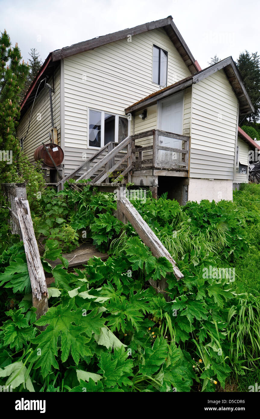 Overgrown stairway in front of house in Kake, Alaska. - Stock Image
