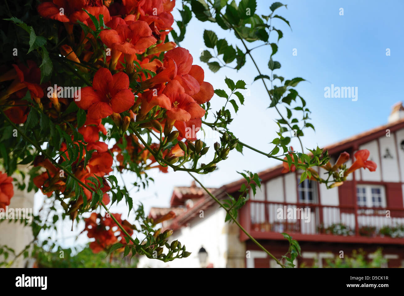 Summer view of the Basque town - Stock Image