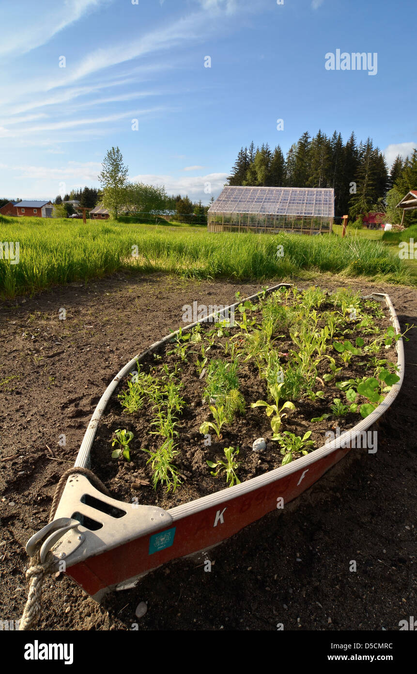 Boat planter at the Gustavus Inn, Gustavus, Alaska. - Stock Image