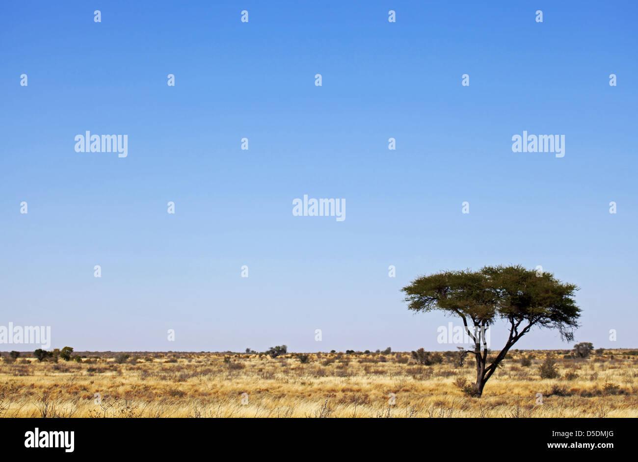 landscape in Central Kalahari Game Reserve, Botsuana - Stock Image