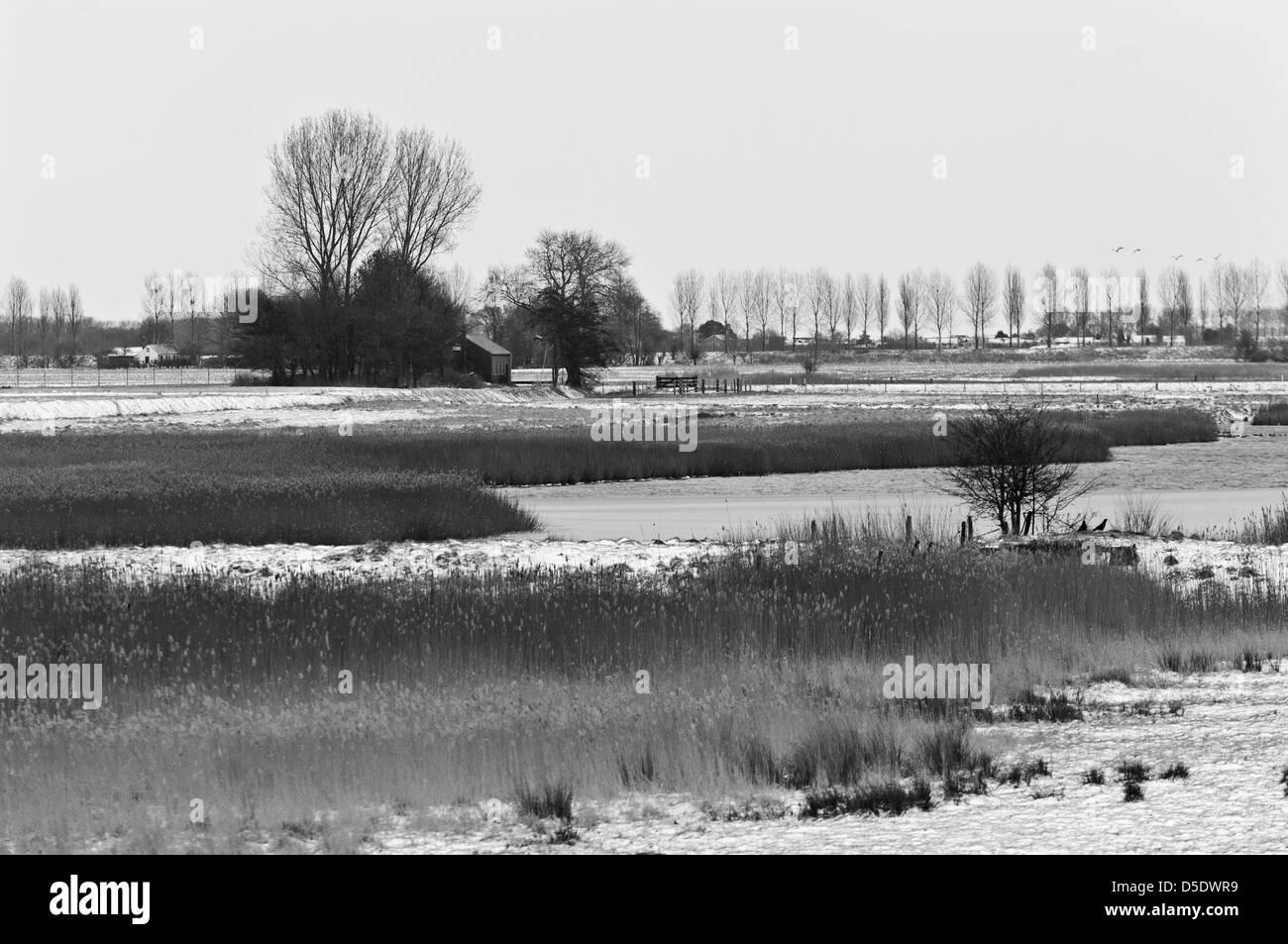 Snowy landscape near 'De Weel'. Wolphaartsdijk, Zeeland, Netherlands. B/W. - Stock Image