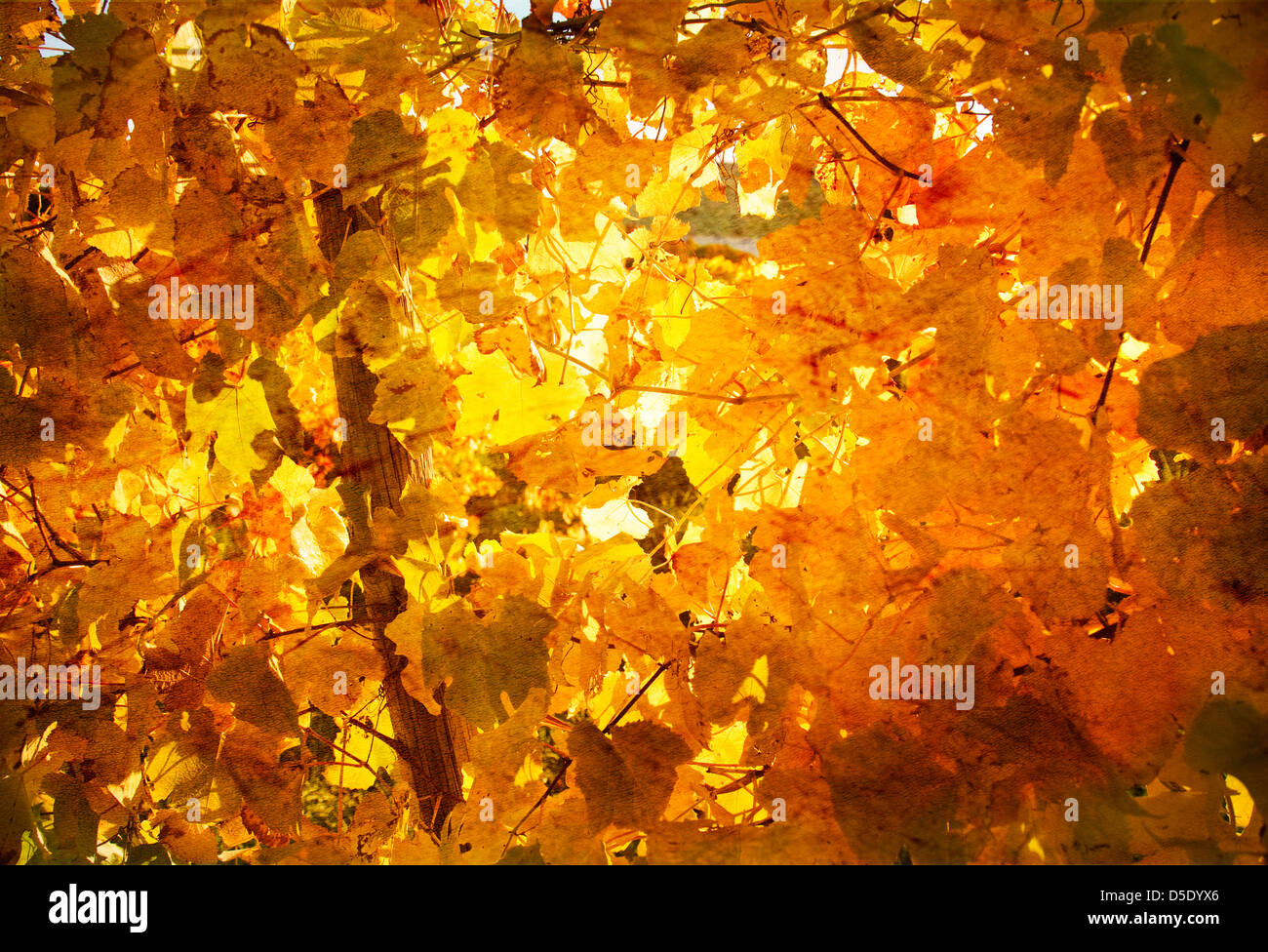 Wall Of Yellow Leaves As Vintage Background Wallpaper