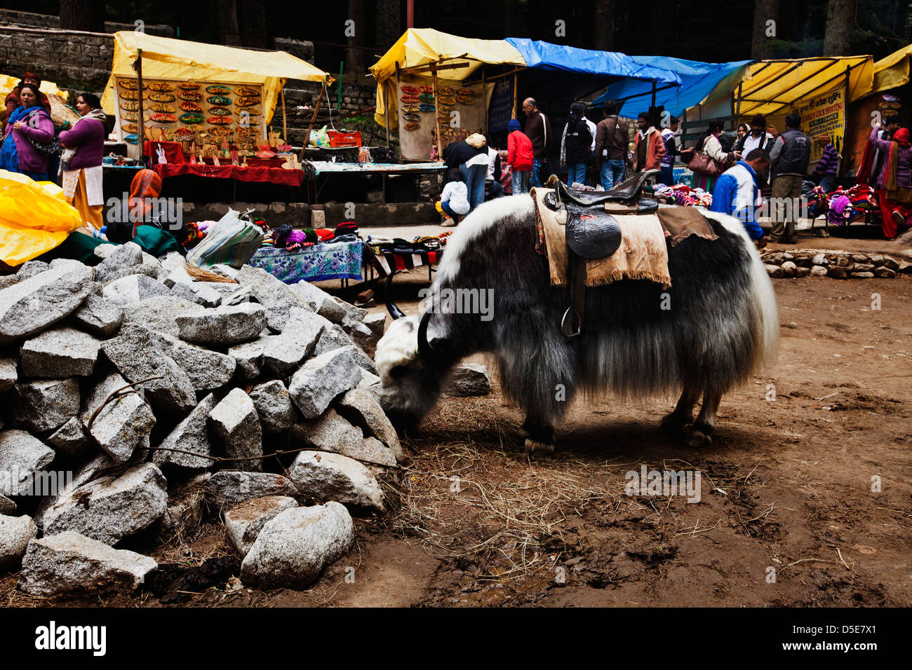 Yak grazing with tourists shopping in the street market, Manali, Himachal Pradesh, India - Stock Image