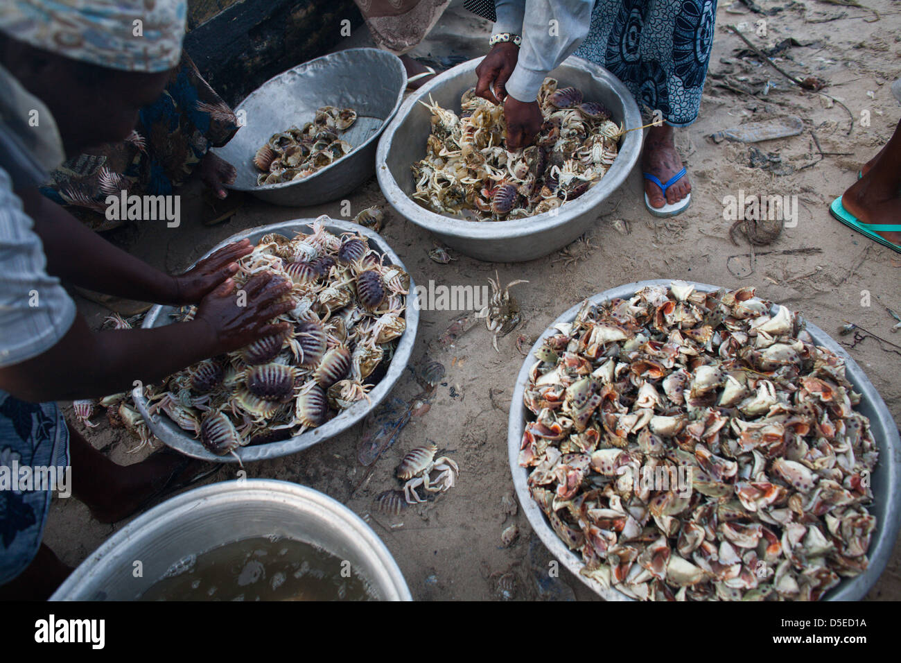 Women clean crabs on the beach in Accra, Ghana. - Stock Image