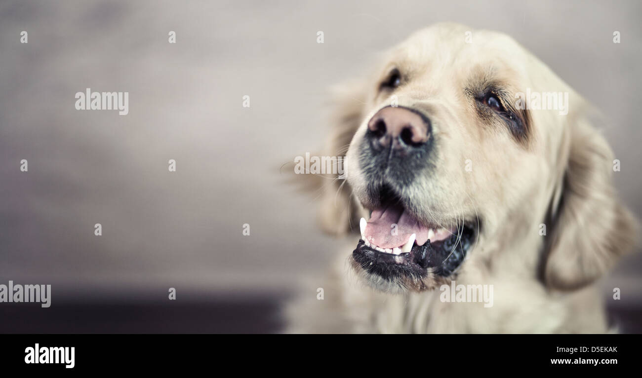 Picture presenting friendly nice pet - Stock Image