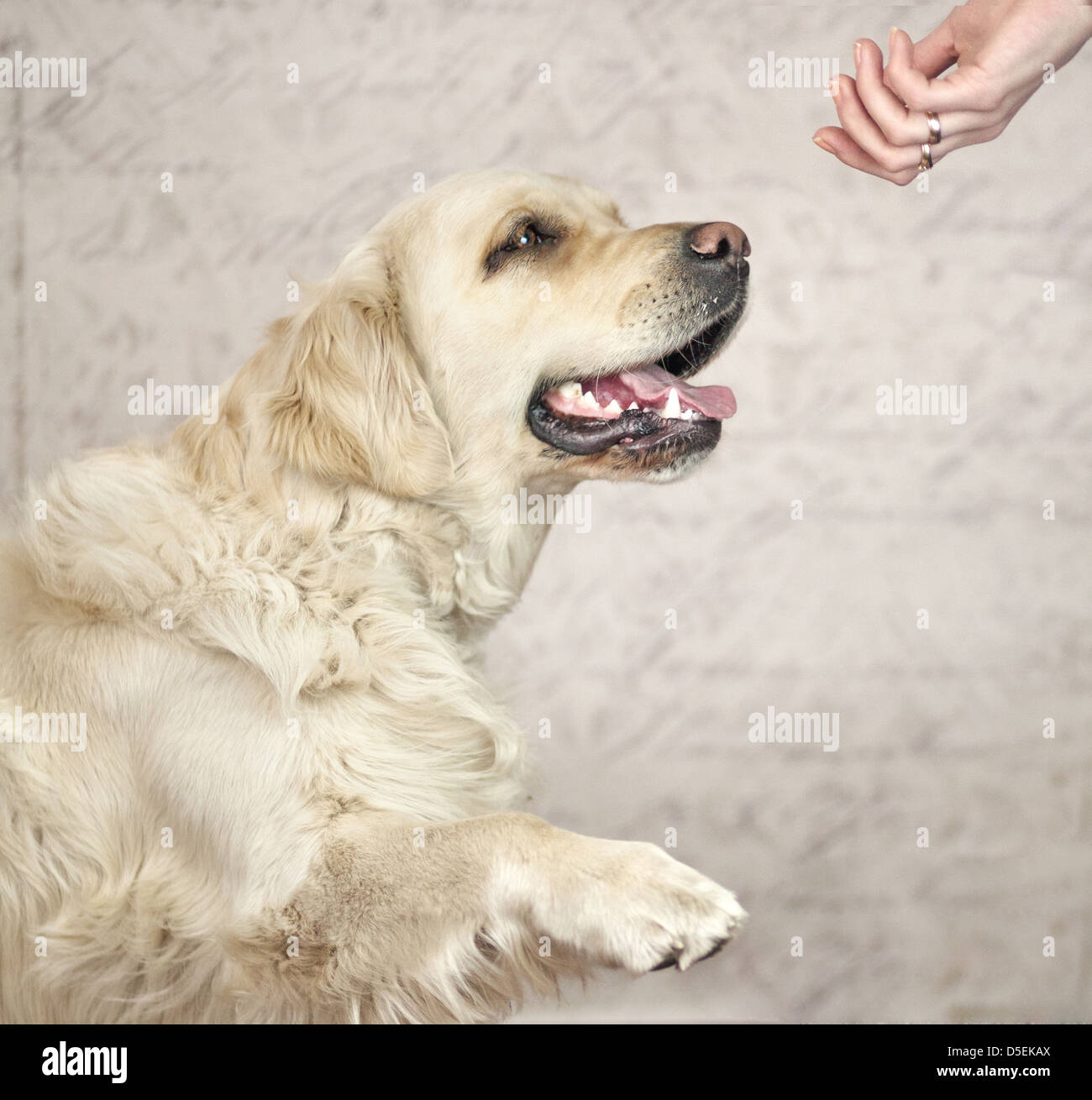 Master wanting to greet with friendly dog - Stock Image