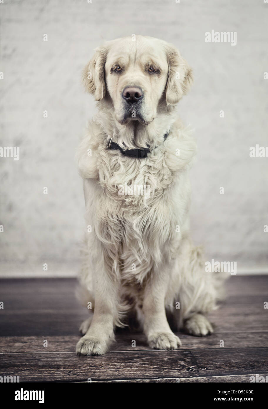 Obedient and calm dog waiting for its master - Stock Image