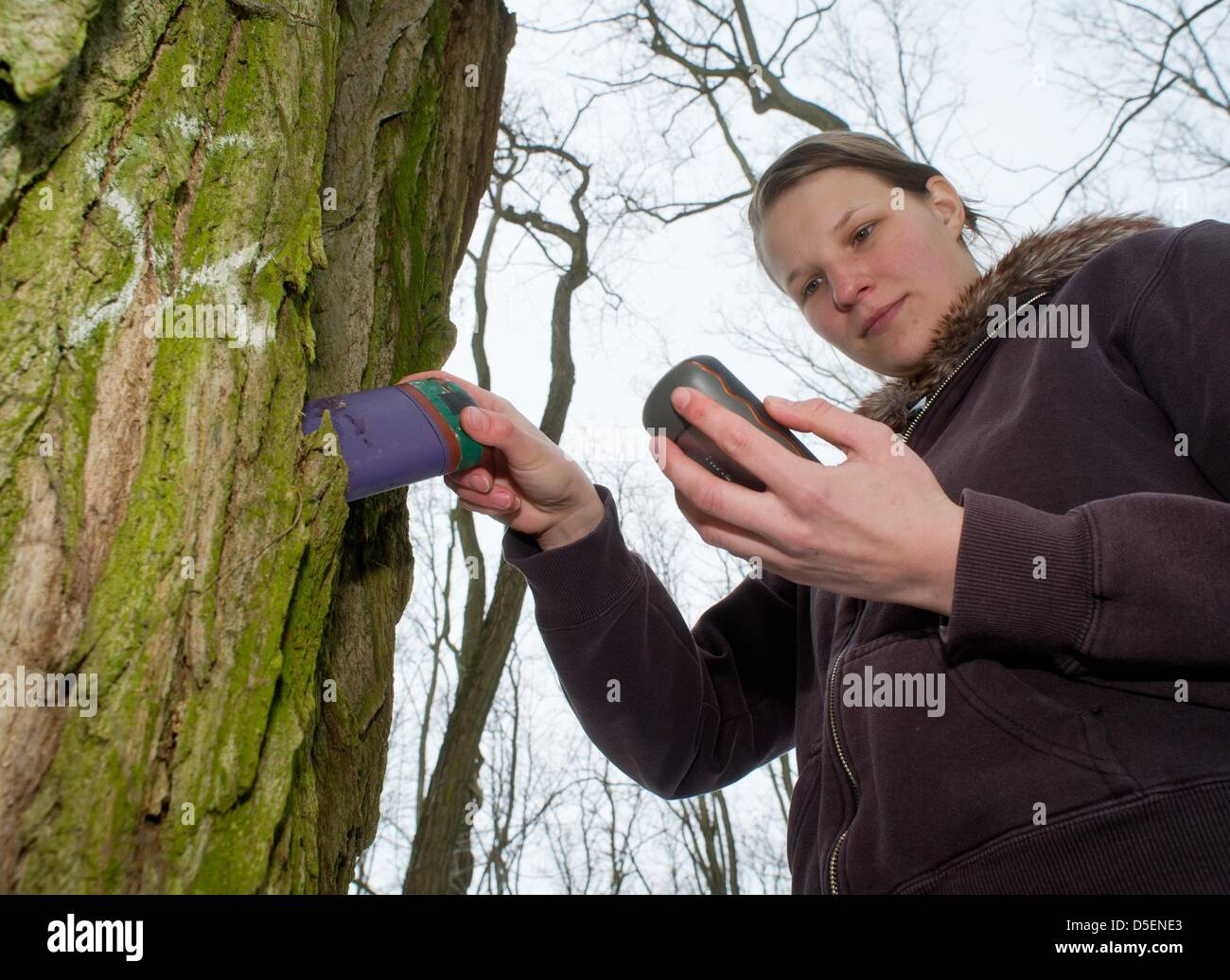 Thekla Noack, who completed a voluntary ecological year (FOEJ) with the August Bier Foundation, hides a geocache - Stock Image