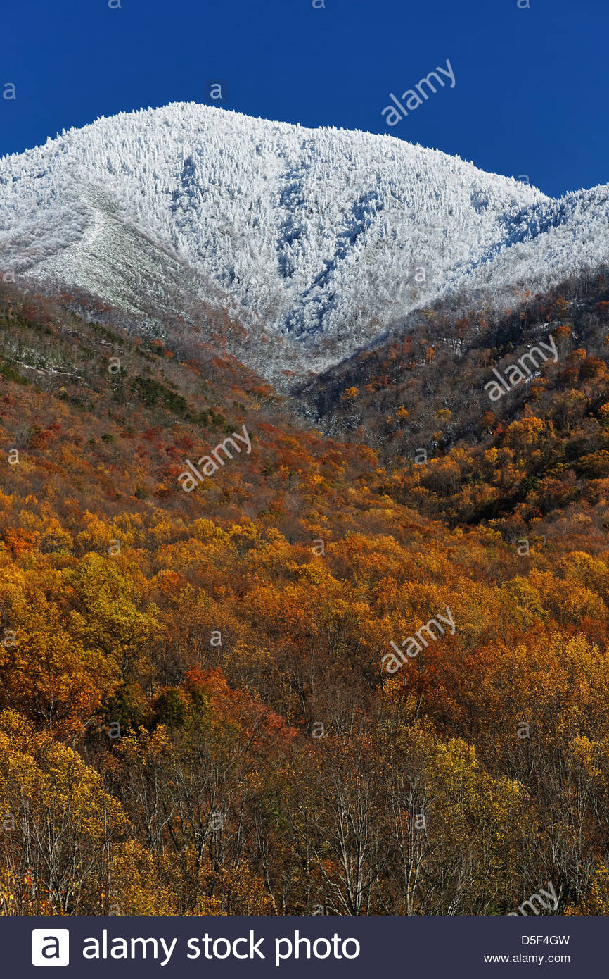Latr Autumn color and snow fall, Great Smoky Mountains National Park, TN. - Stock Image