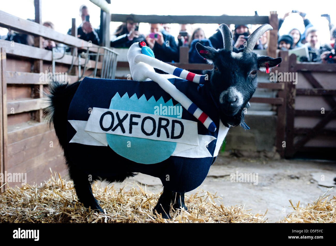 London, UK - 31 March 2013: Oxford Goat poses for a picture at the 5th Annual Oxford and Cambridge Goat Race that - Stock Image