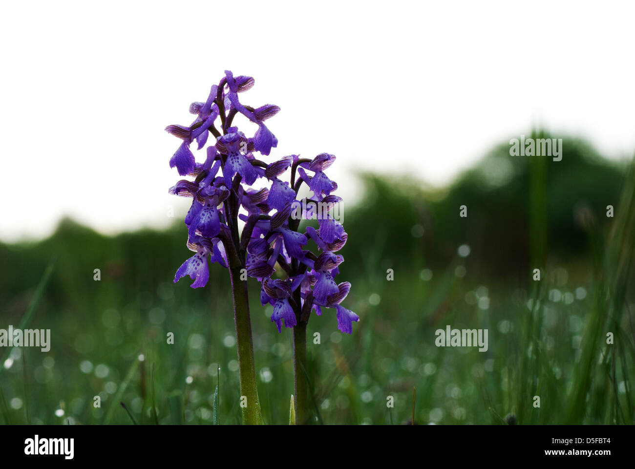 Among dewdrops in summer morning - Stock Image