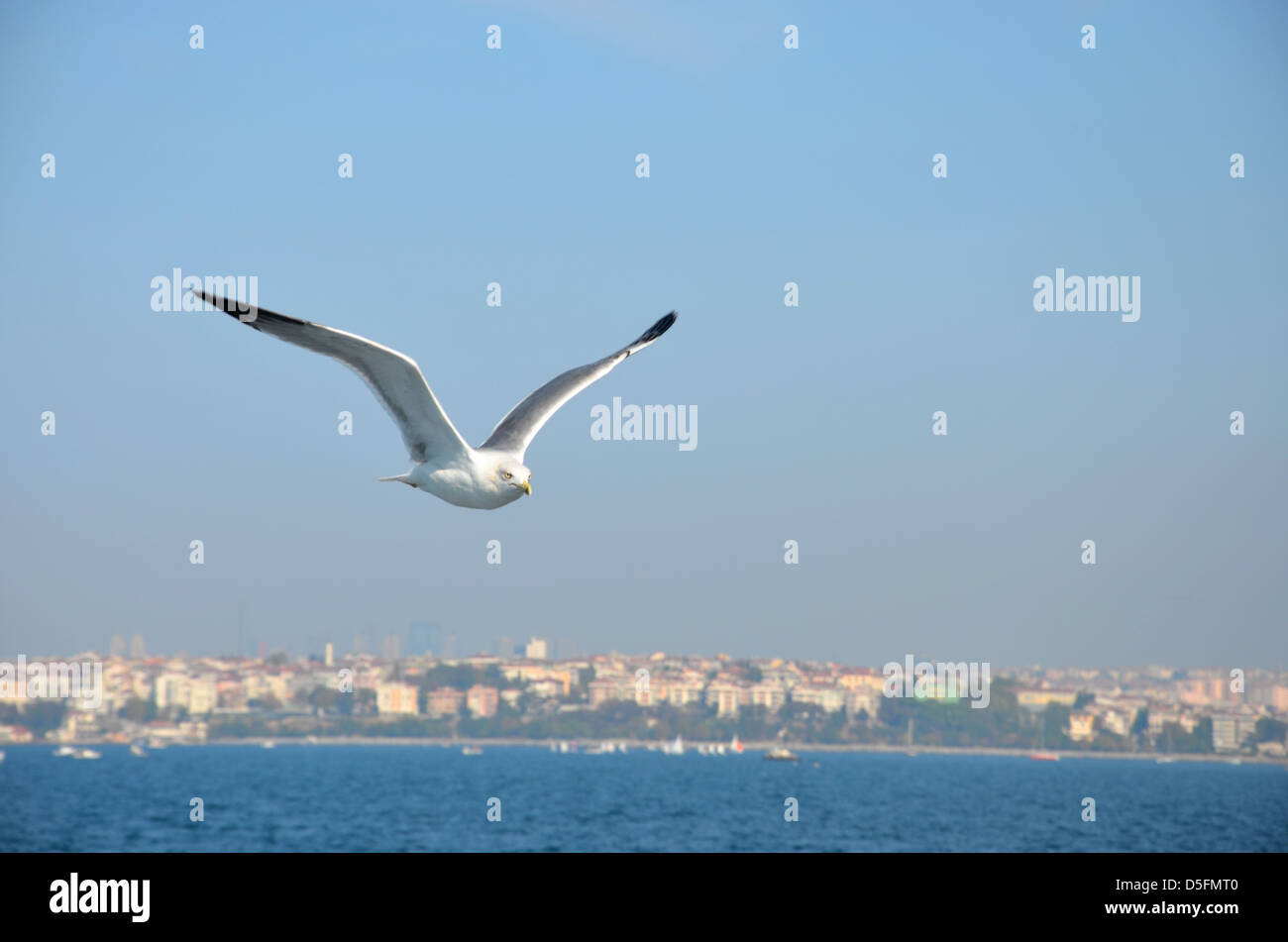 Seagull soaring in breeze - Stock Image