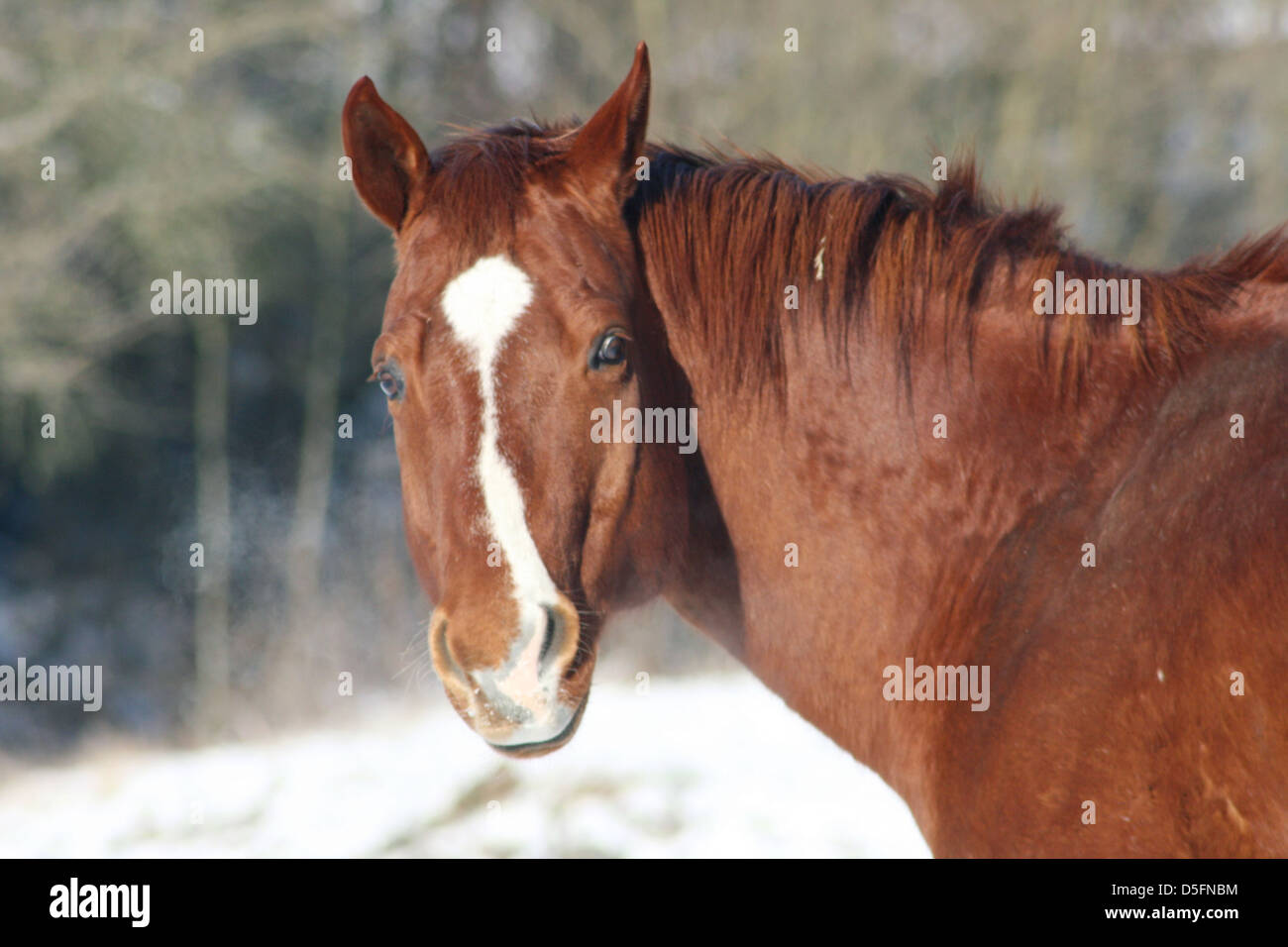 a brown horse - Stock Image