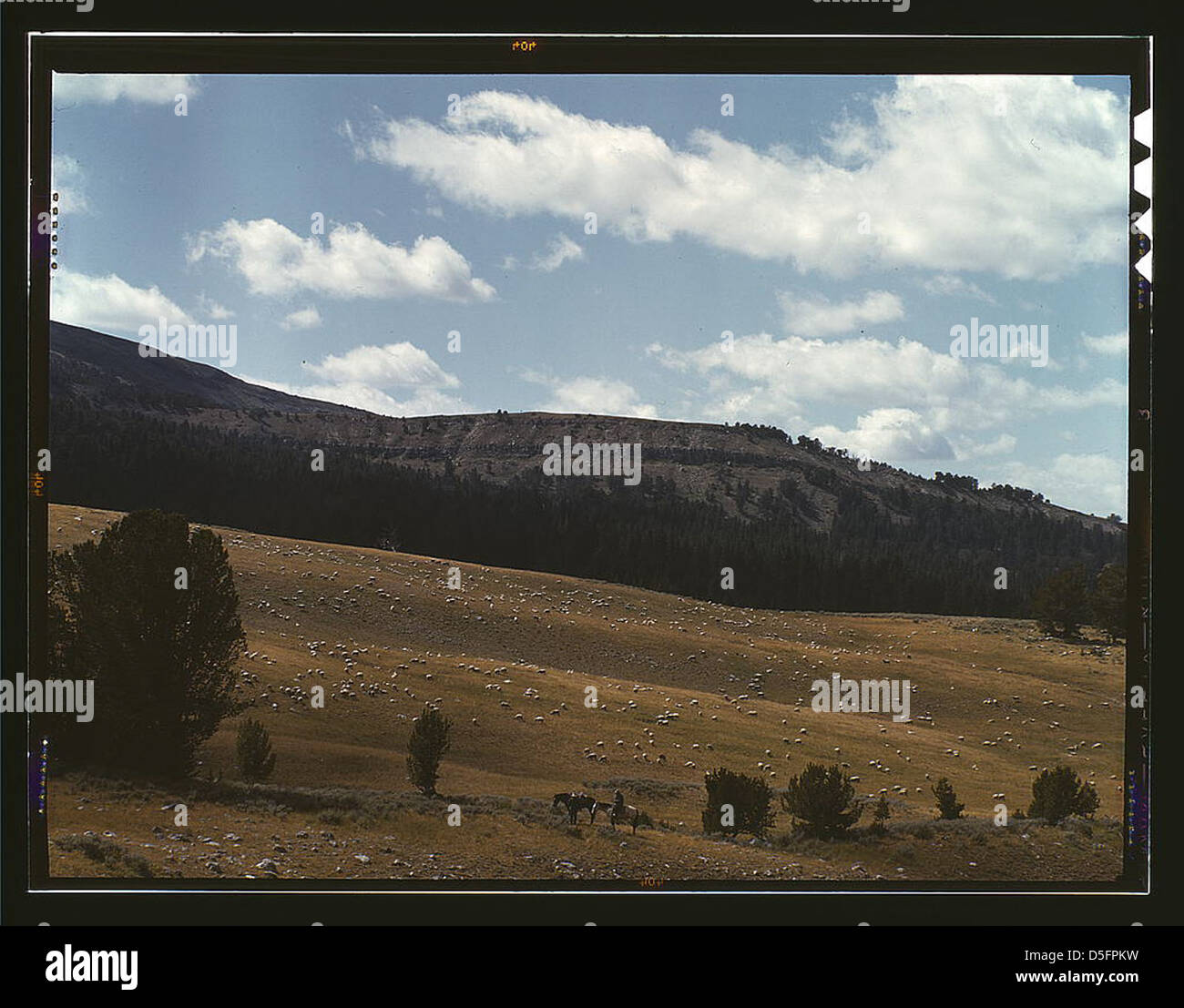 Bands of sheep on the Gravelly Range at the foot of Black Butte, Madison County, Montana (LOC) - Stock Image