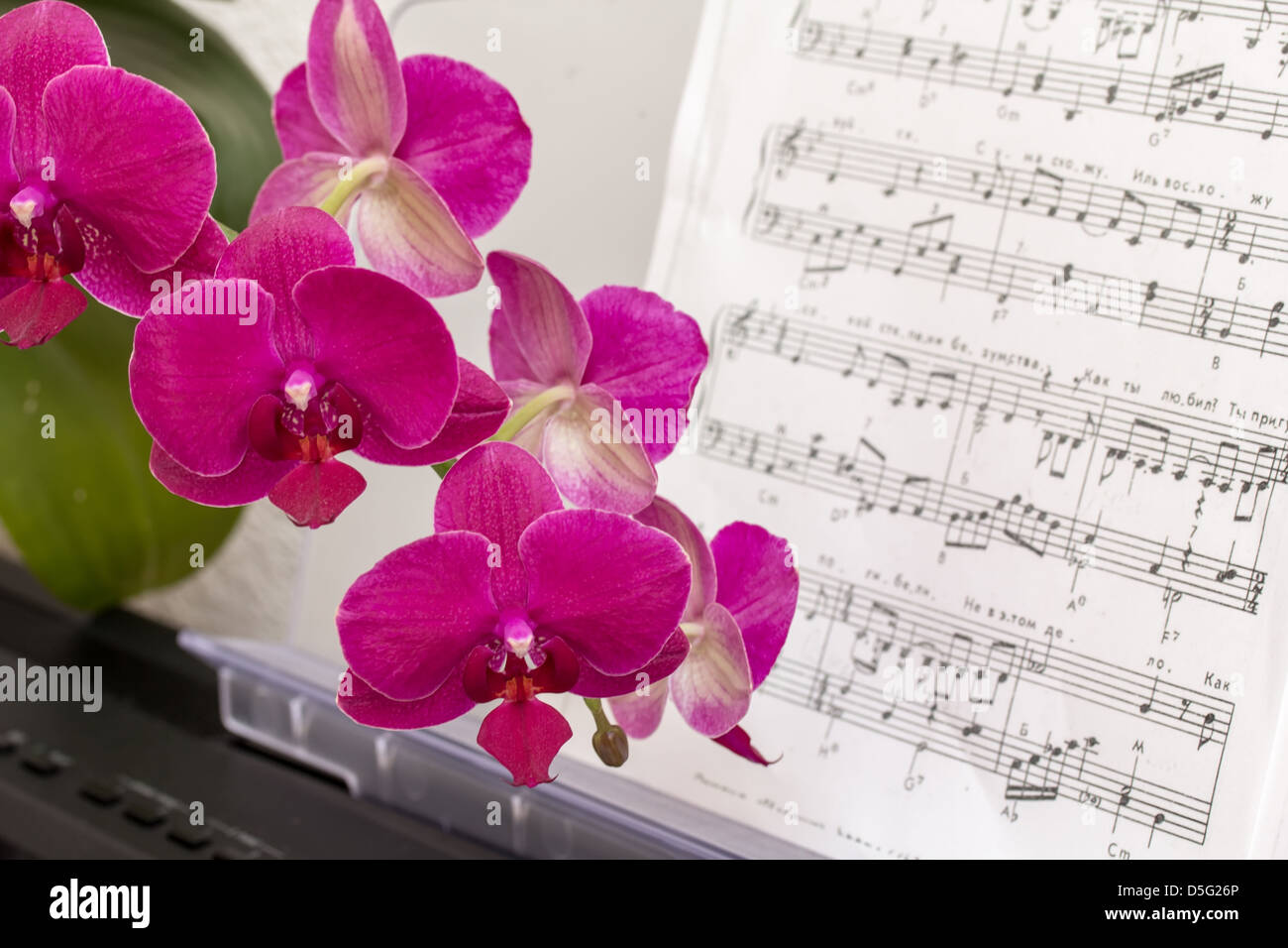 Pink orchid flower on a synthesizer keyboard with notes - Stock Image