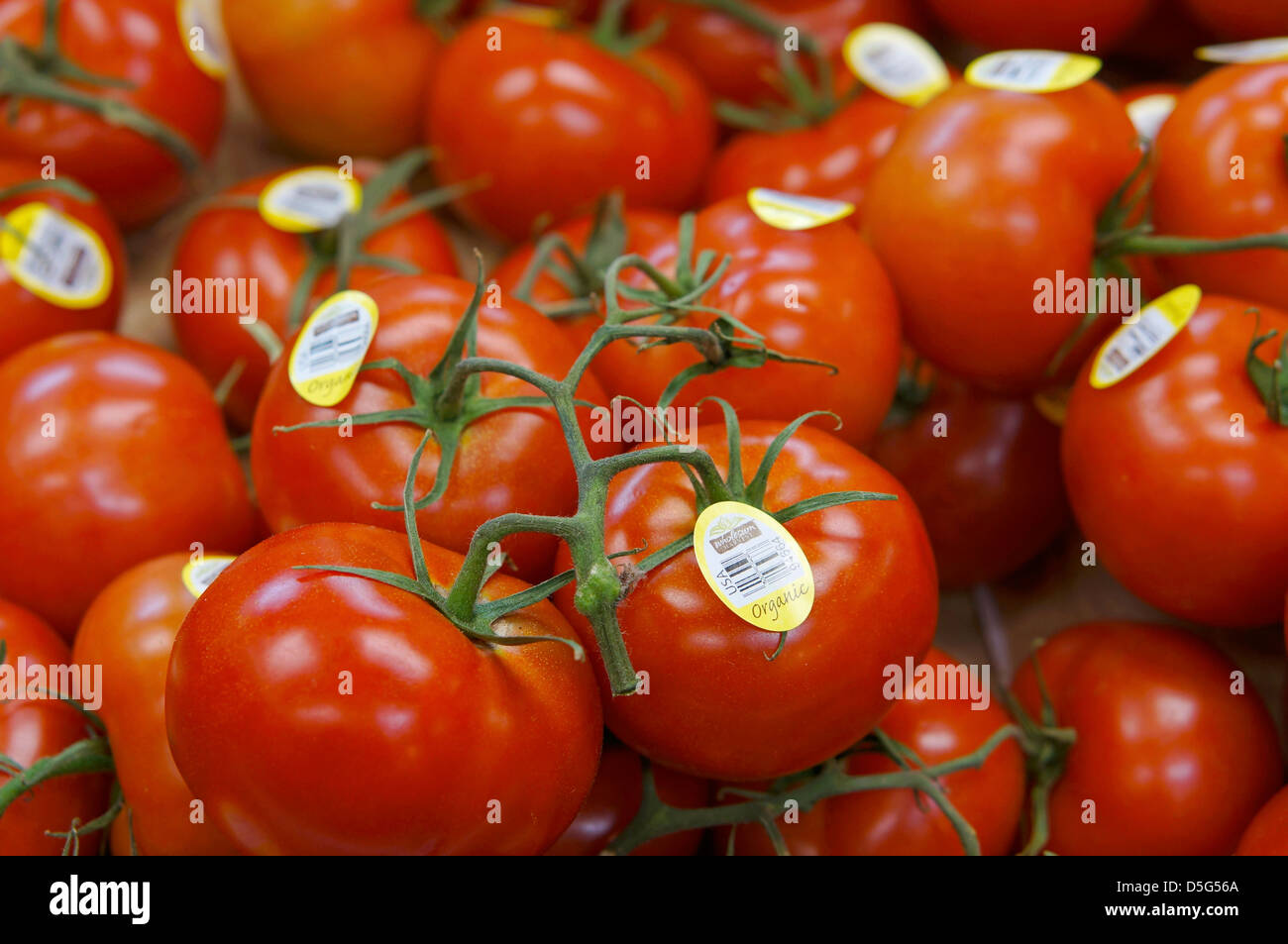 Organic Vine Tomatoes with Labels - Stock Image
