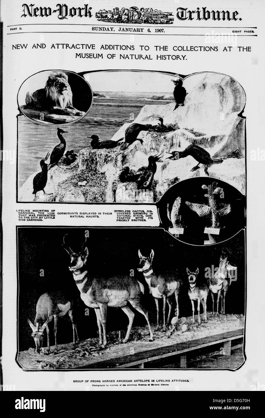 New and attractive additions to the collections at the Museum of Natural History. (LOC) - Stock Image