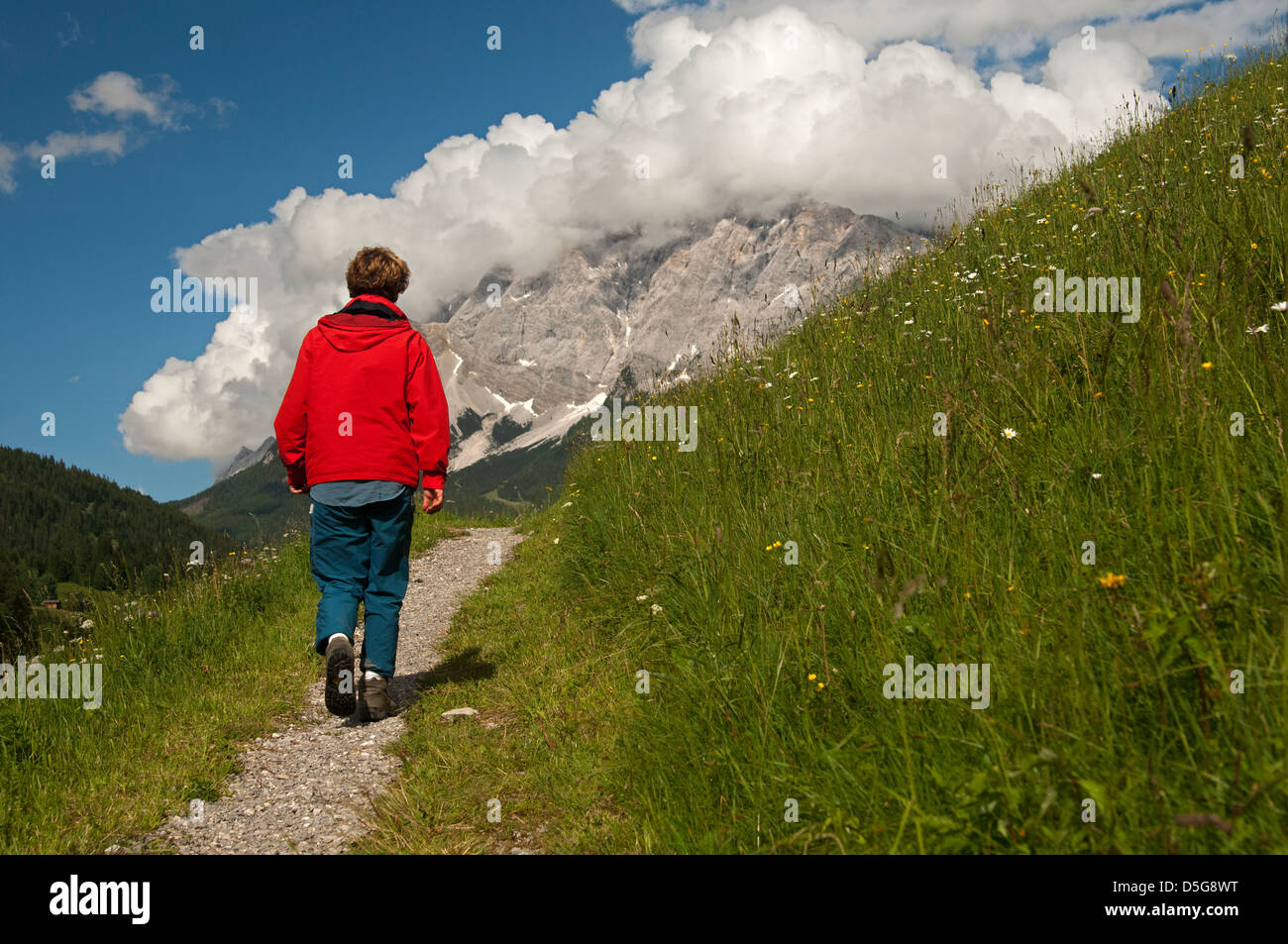 Hiker on a trail in the hiking area Ehrwalder Becken, view at the Wetterstein Mountains, Ehrwald, Tyrol, Austria - Stock Image