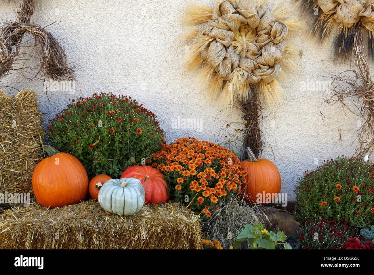 Autumn decorations - Stock Image