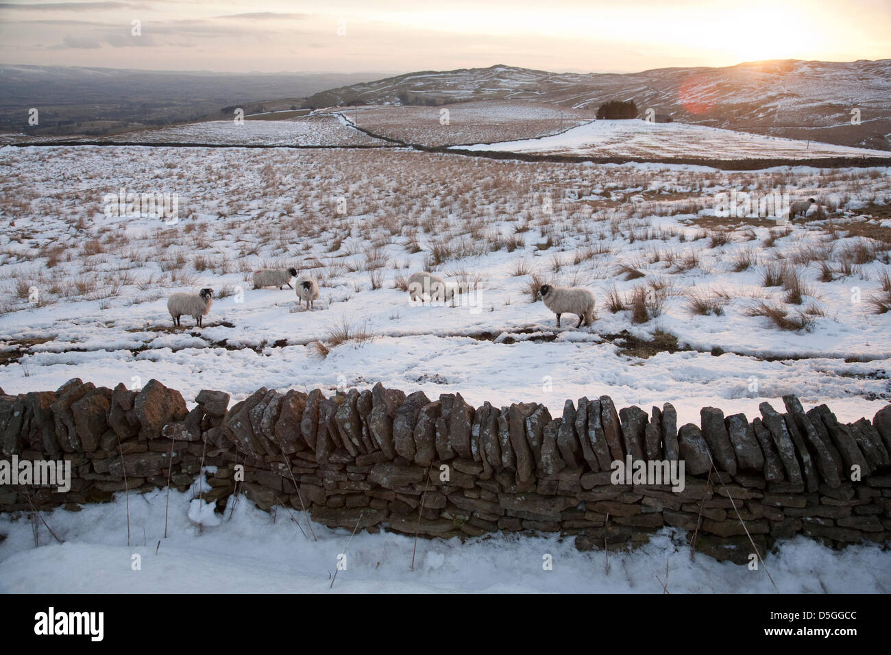Teesdale, County Durham, UK. 31st March 2013. Snow cover remains in Teesdale, County Durham, England, UK where sheep Stock Photo