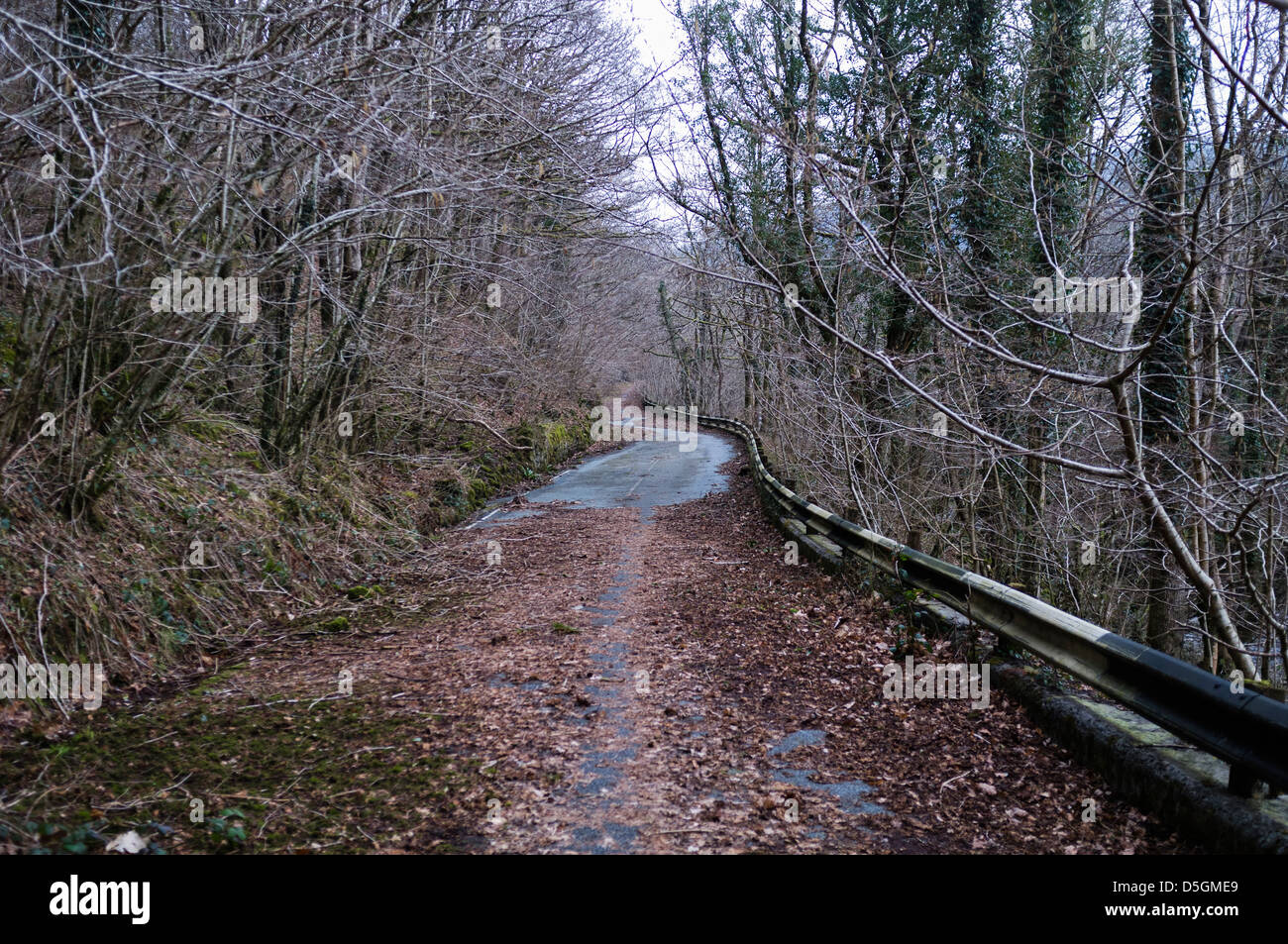 A stretch of abandoned A494 trunk road, overgrown and and being reclaimed by nature, Rhydymain Wales UK Stock Photo