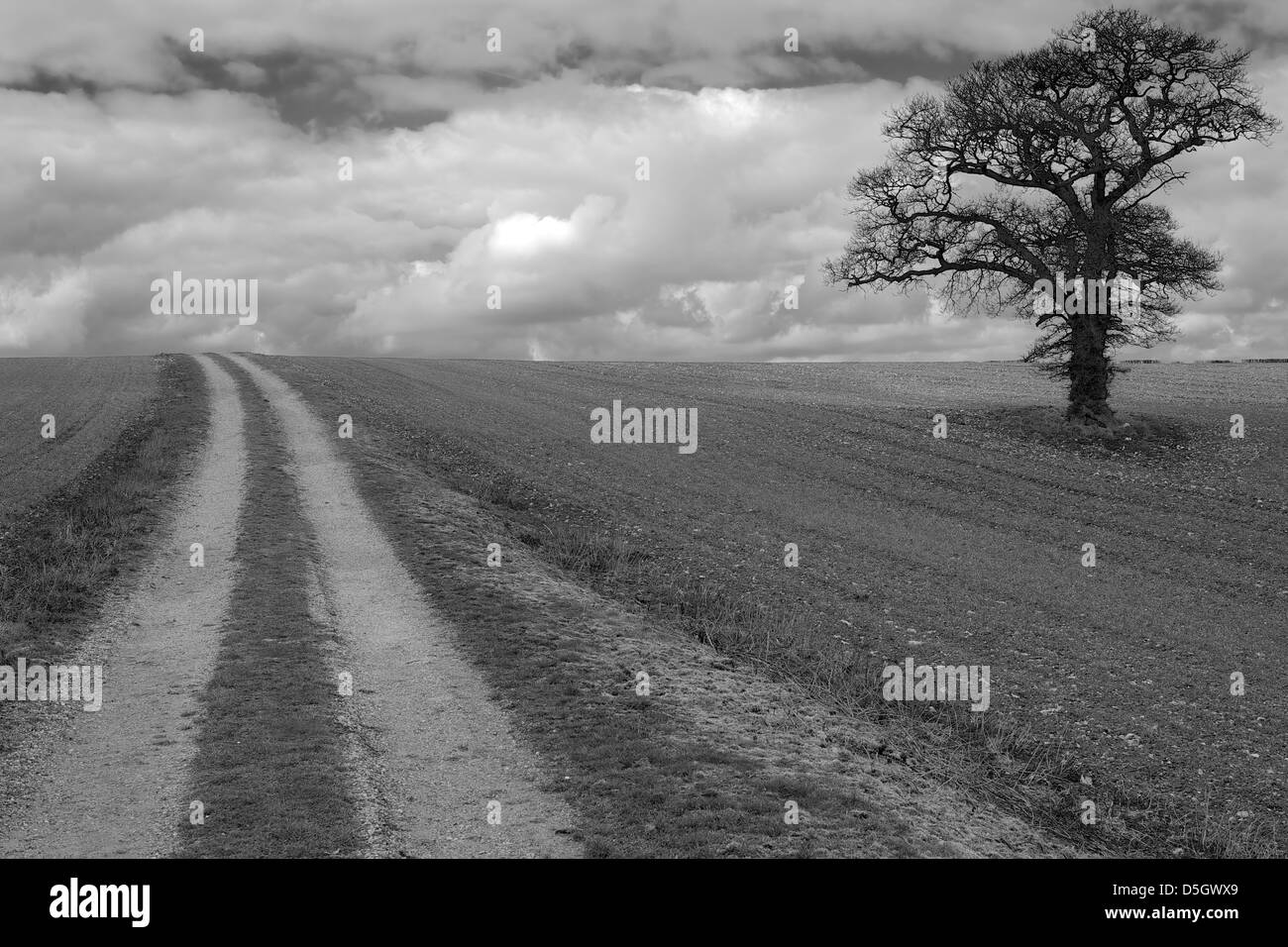 Black & White Tree in field against a cloudy sky - Stock Image