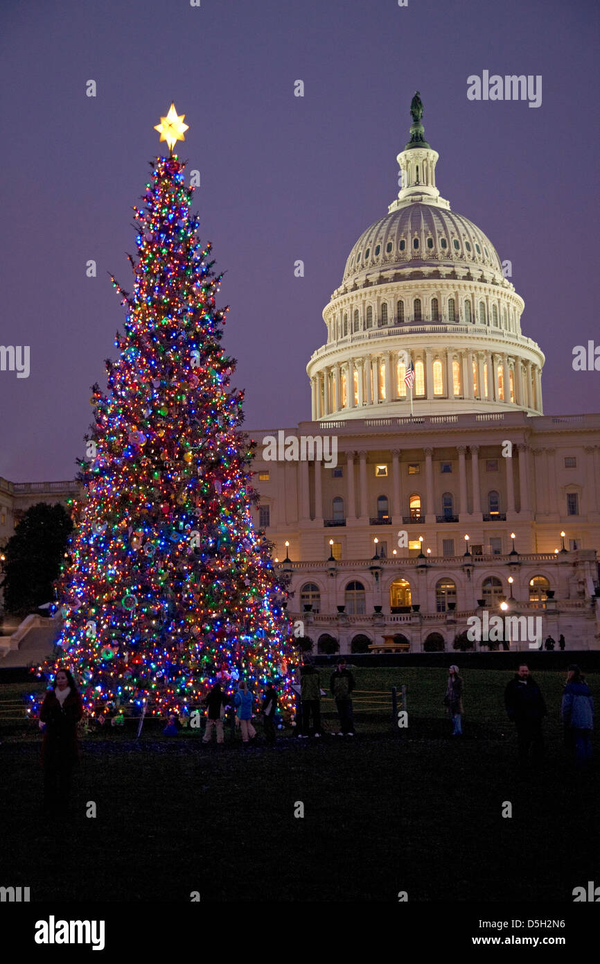 Capitol Christmas Tree at dusk in front of U.S. Capitol, Washington D.C., USA - Stock Image