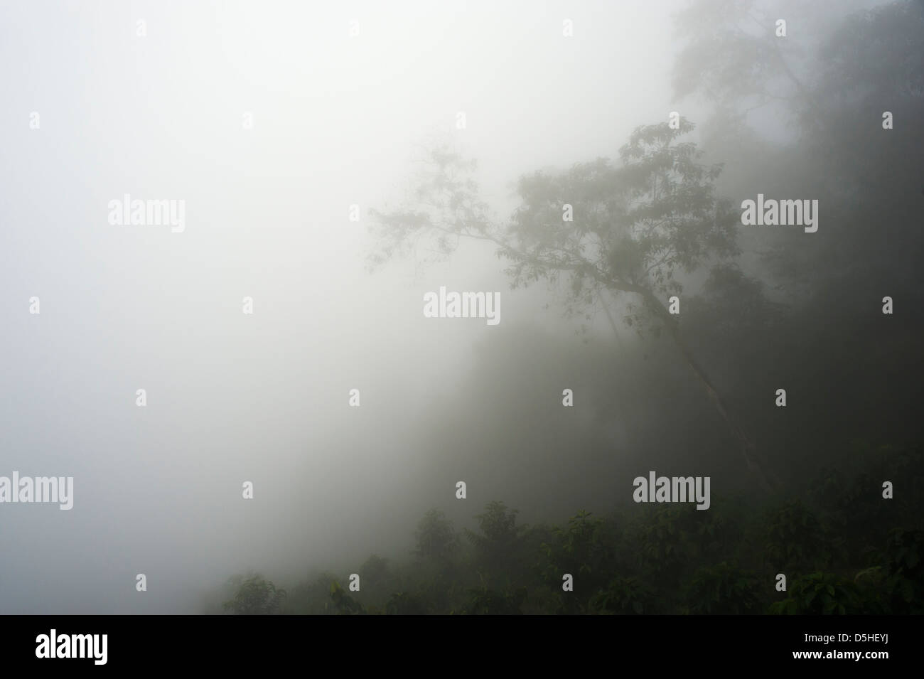 Tropical rain forest in the fog. photographed in the Sierra Nevada de Santa Marta. a coastal mountain range in northern - Stock Image