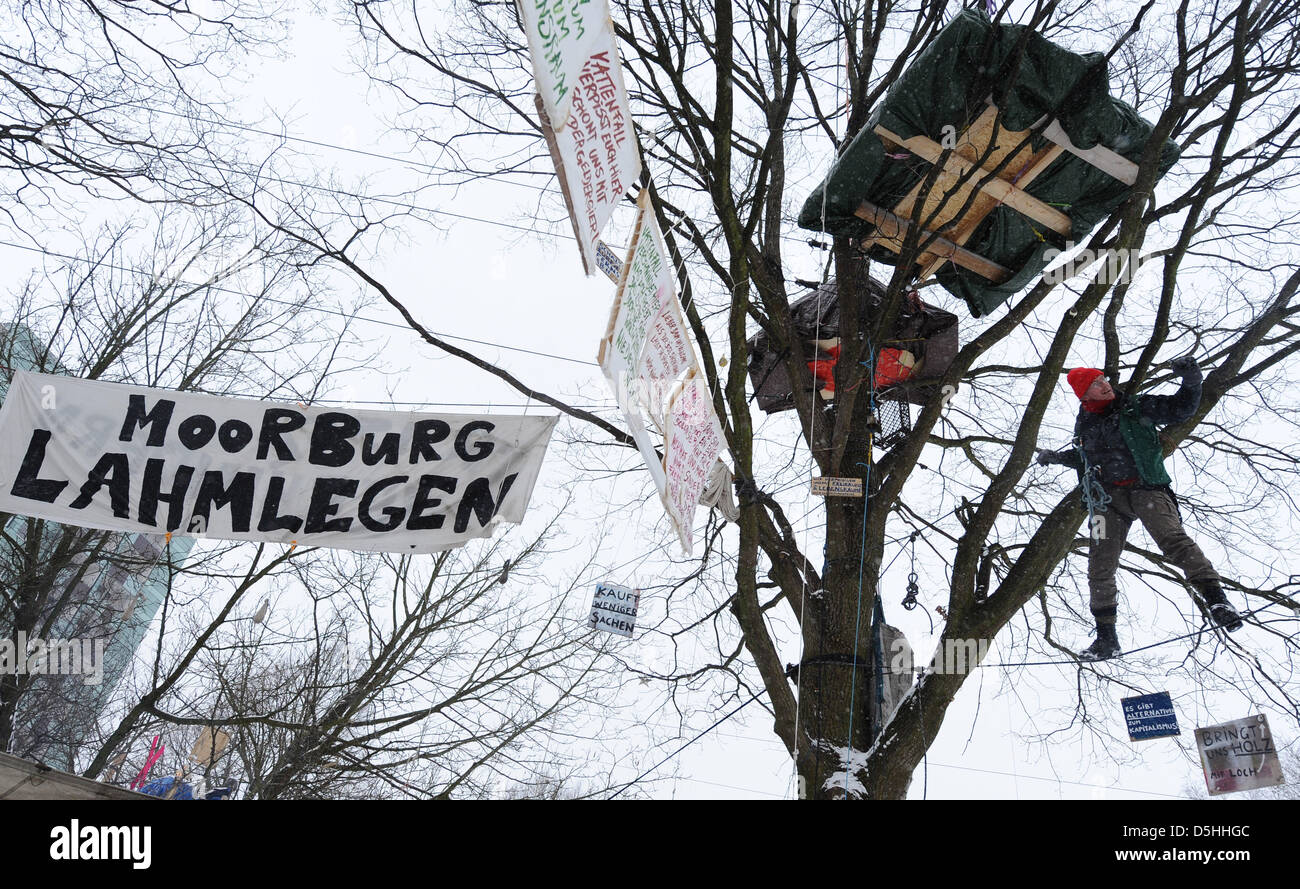An activist of environemental organisation 'Robin Wood' climbs a tree in Hamburg, Germany, 10 February 2010. Since Stock Photo