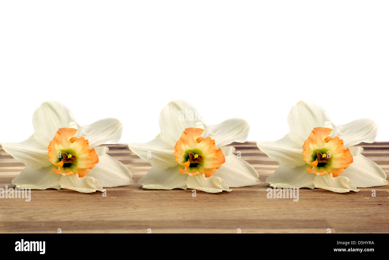 Three daffodils lying on oak with a white background - Stock Image