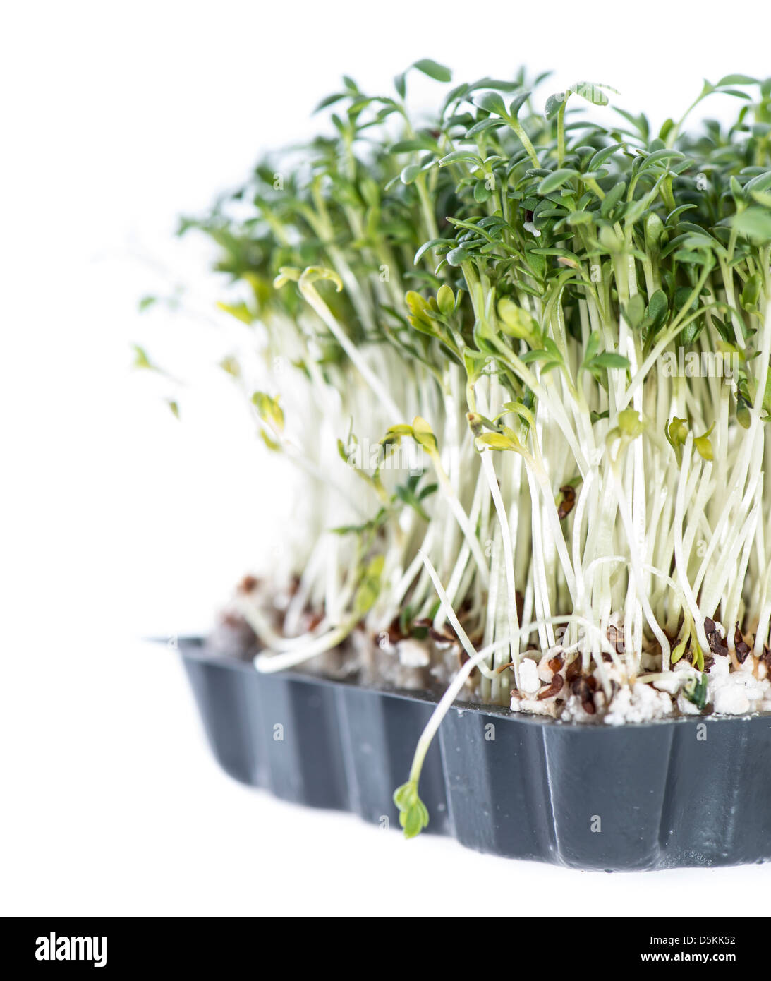 Cress isolated on white background - Stock Image