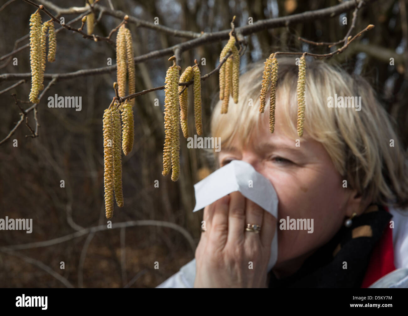 hay fever, woman sneezing beyond hazelnut bush, symbolic picture, symbol, - Stock Image