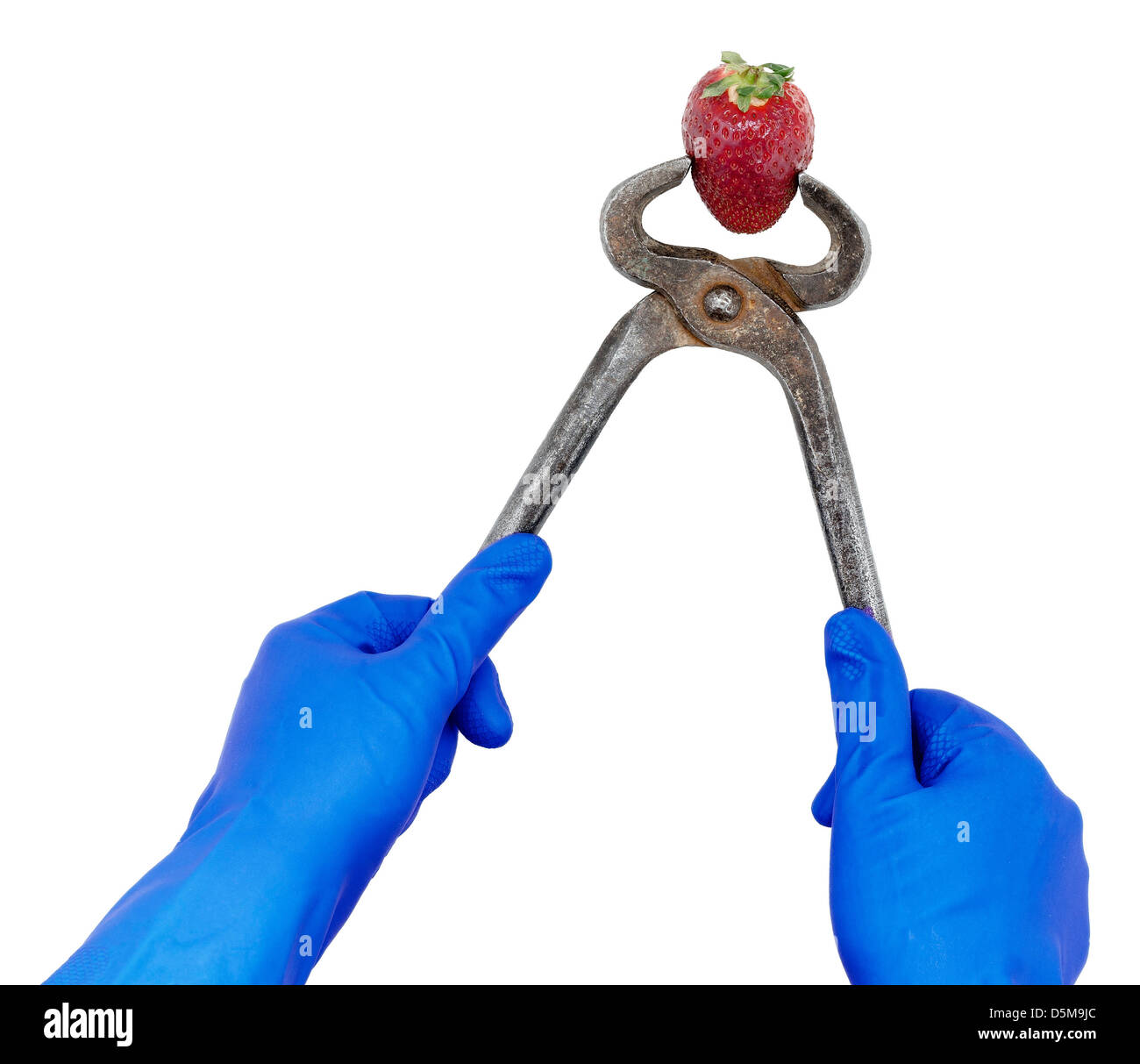 Gloved hands oppress a strawberry with tongs - Stock Image