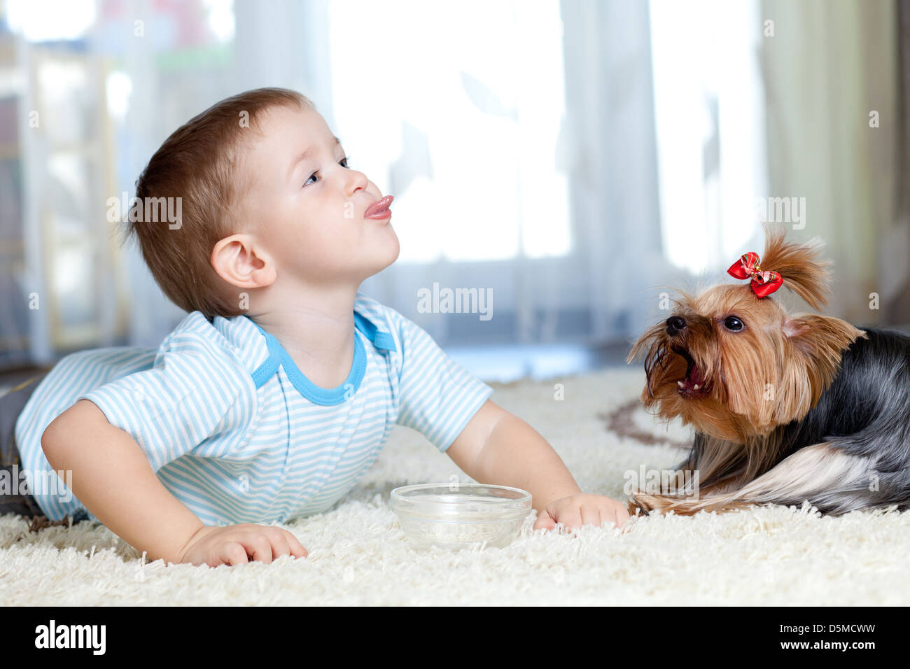 adorable boy feeding yorkshire terrier dog at home Stock Photo