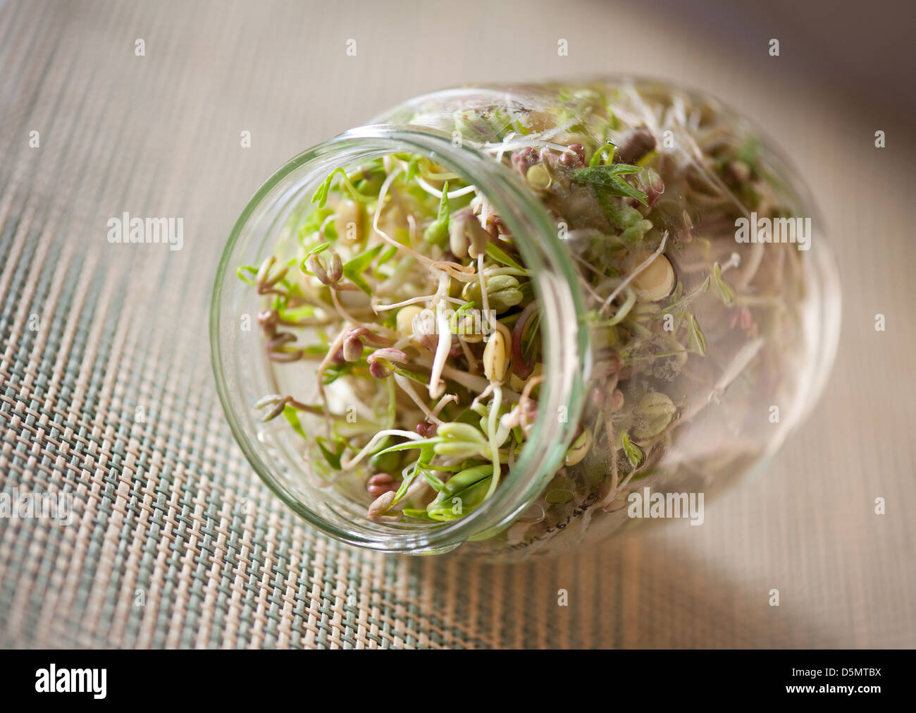 Mix of cereal shoots growing in glass jar - Stock Image