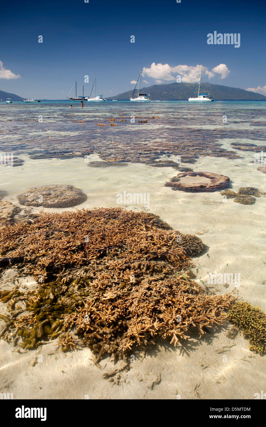 Madagascar, Nosy Be, Nosy Tanikely island coral heads in shallows off main beach - Stock Image