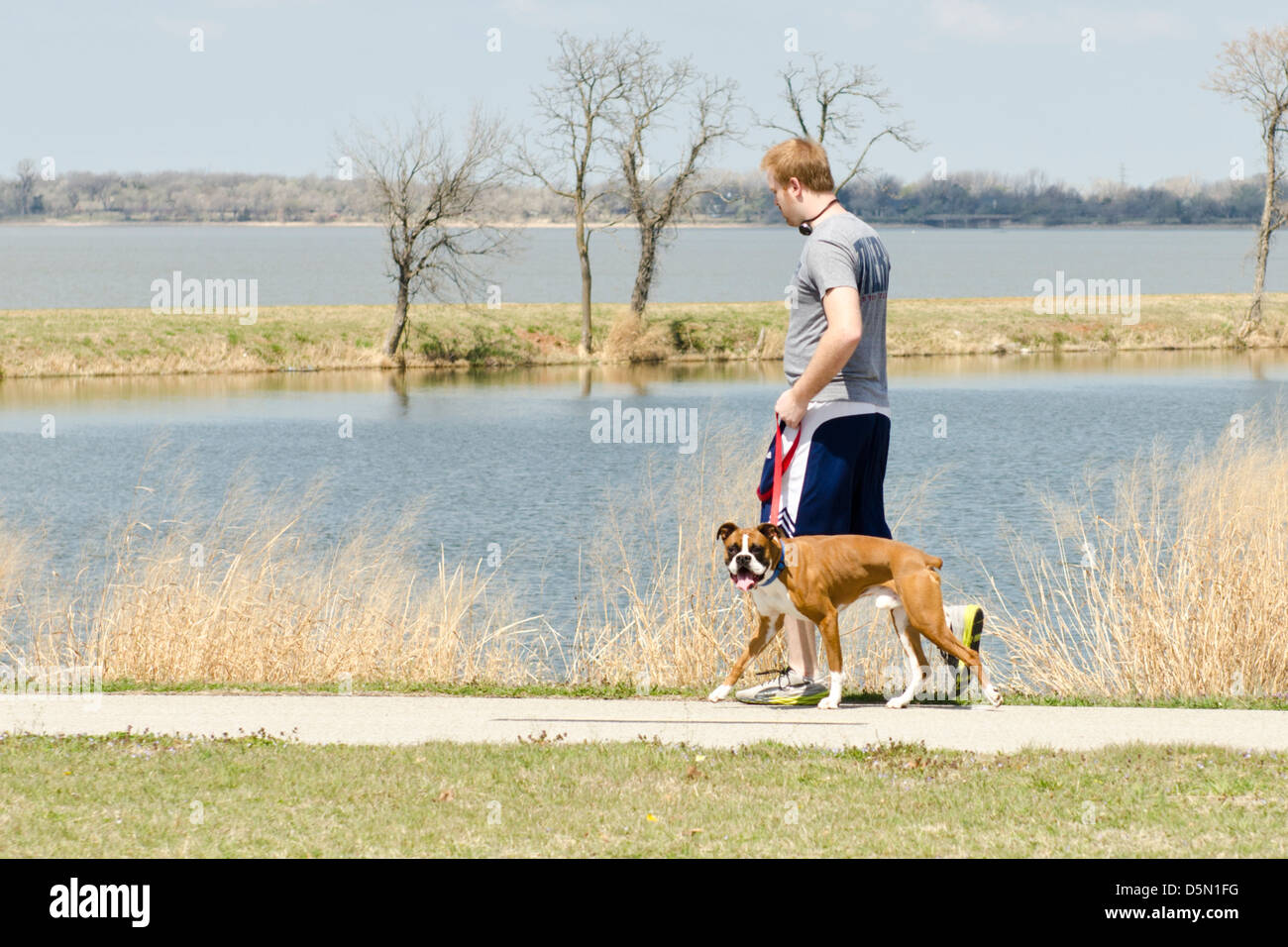 A young red-headed man walks his boxer dog on the trails around Overholser lake in Oklahoma City, Oklahoma, USA. - Stock Image